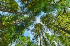 Vue supérieure dans la forêt tropicale Images libres de droits