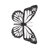 Vue supérieure de beau papillon de monarque, illustration d'isolement de style de croquis illustration de vecteur