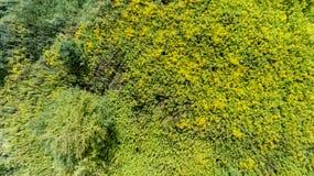 Vue supérieure de buisson de pré d'été d'herbe verte d'en haut Images stock