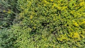 Vue supérieure de buisson de pré d'été d'herbe verte d'en haut Photographie stock