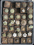 Vue supérieure de cactus et de succulents Photographie stock libre de droits