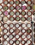 Vue supérieure de cactus fleurissant Photo libre de droits