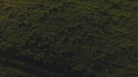 Vue supérieure de champ et de collines verts sur l'horizon longueur Plan rapproché de belle herbe sauvage verte de côté de route  banque de vidéos