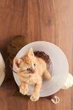 Vue supérieure de chaton rouge se reposant dans le seau clair Photos stock