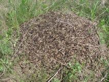 Vue supérieure de colline de fourmi vers le bas Photos stock