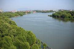 Vue supérieure de forêt avec les arbres et la rivière Photographie stock libre de droits