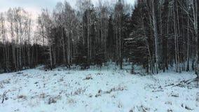 Vue supérieure de forêt mélangée en hiver barre Vue de forêt dense avec des bouleaux et des pins contre le ciel nuageux en hiver clips vidéos