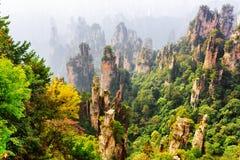 Vue supérieure de forêt naturelle de grès de quartz parmi des bois de chute image stock