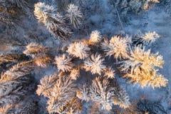 Vue supérieure de forêt de Noël Les sapins givrés ont illuminé avec le soleil tôt le matin Fond vif d'hiver images libres de droits