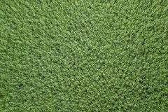 Vue supérieure de graine de colza de champ vert d'agriculture rapeseed photos stock