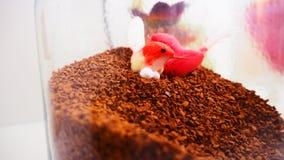 Vue supérieure de grains de café sur le fond blanc propre avec la composition des tasses de café, oiseaux colorés, lampes, jardin Photo stock