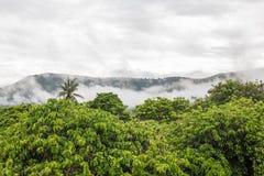 Vue supérieure de haut arbre de forêt avec le fond de brouillard et de montagne Images stock
