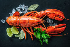 Vue supérieure de homard rouge entier avec de la glace et la chaux photo stock