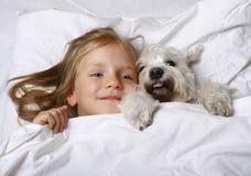 Vue supérieure de la belle petite fille blonde se trouvant avec le chiot blanc de schnauzer sur le lit blanc Concept d'amitié Images libres de droits
