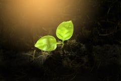 Vue supérieure de la plante verte de jeune plante s'élevant dans le sol image libre de droits