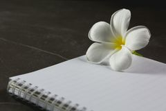 Vue supérieure de livre ouvert Livre ouvert, avec le stylo et la fleur sur la table photographie stock libre de droits