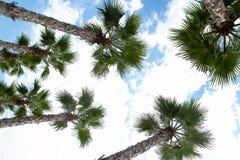 Vue supérieure de palmier Photo stock