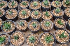 Vue supérieure de petit cactus photographie stock libre de droits