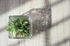 Vue supérieure de peu de plante verte dans le pot en verre sur la table avec le style de lumière et d'ombre Photographie stock libre de droits