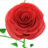 Vue supérieure de Rose Bud d'isolement sur le fond blanc Image libre de droits