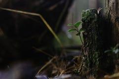 Vue supérieure de texture de mousse de forêt de plan global Image stock