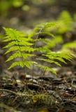 Vue supérieure de texture de mousse de forêt de plan global Photo libre de droits