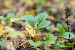 Vue supérieure de texture de mousse de forêt de plan global Photos stock