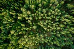 Vue supérieure des arbres forestiers verts Photo aérienne images stock
