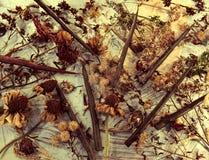 Vue supérieure des bougies vertes, des fleurs d'aster, des graines et des herbes sèches sur la table images libres de droits