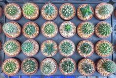 Vue supérieure des cactus Images libres de droits