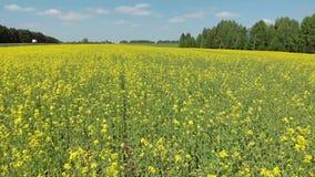 Vue supérieure des champs fleurissants et du tir de forêt d'un quadcopter banque de vidéos