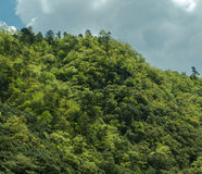 Vue supérieure des collines vertes rocheuses le long de la rivière de Hozugawa Images libres de droits
