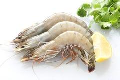 Vue supérieure des crevettes fraîches de Golfe Photos libres de droits
