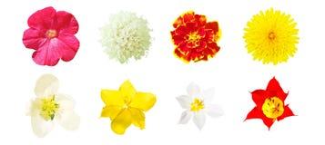Vue supérieure des fleurs d'isolement par couleur images libres de droits