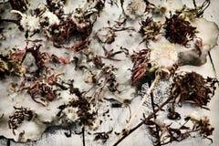 Vue supérieure des fleurs et des graines sèches d'aster sur le vieux fond et planches de papier photographie stock