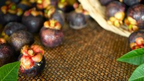 Vue supérieure des mangoustans moissonnés délicieux frais sur la table en bois Fruit pourpre organique thaïlandais dans le panier banque de vidéos