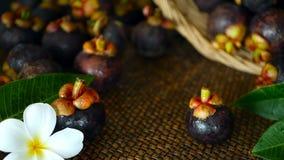 Vue supérieure des mangoustans moissonnés délicieux frais sur la table en bois Fruit pourpre organique thaïlandais dans le panier clips vidéos