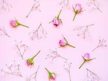 Vue supérieure des roses roses au-dessus du fond rose Abrégez le fond floral image libre de droits