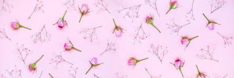 Vue supérieure des roses roses au-dessus du fond rose Drapeau floral abstrait photo stock
