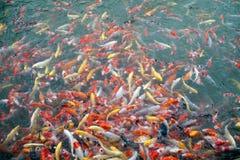 Vue supérieure des symboles de fantaisie colorés de poissons de carpe de Koi de la bonne chance Photos libres de droits