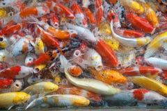 Vue supérieure des symboles de fantaisie colorés de poissons de carpe de Koi de la bonne chance Photographie stock