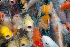 Vue supérieure des symboles de fantaisie colorés de poissons de carpe de Koi de la bonne chance Image stock