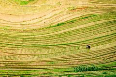 Vue supérieure des terrasses de riz de Longji de Longsheng à Guilin, Chine photos libres de droits