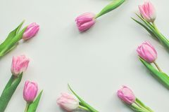 Vue supérieure des tulipes roses de premier ressort sur le fond blanc avec l'espace de copie Beau fond de ressort pour le jour de Photo libre de droits