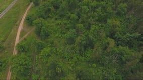 Vue supérieure du chemin de terre le long de la forêt banque de vidéos