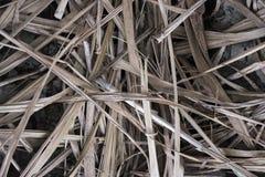 Vue supérieure du plancher d'une plantation de canne à sucre photo stock