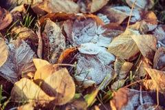 Vue supérieure pour des feuilles d'automne avec le matin de hoar en novembre photos libres de droits