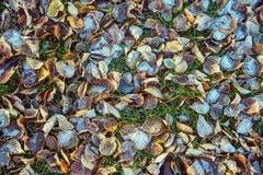 Vue supérieure pour des feuilles d'automne avec le matin de hoar en novembre photographie stock
