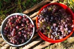 Vue supérieure sur deux seaux avec des raisins frais photographie stock