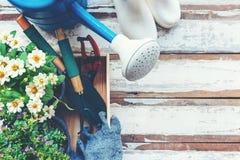 Vue supérieure sur faire du jardinage une pelle remplie d'outil mis en pot de sol et de fleurs pendant le printemps d'été de jard images libres de droits